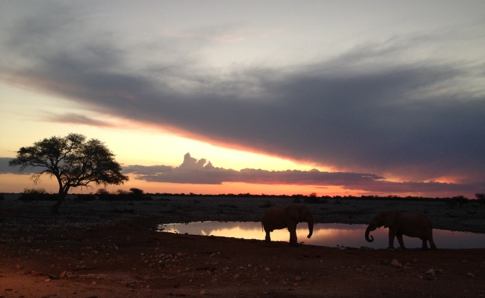 Africa Part 1 – South Africa andNamibia